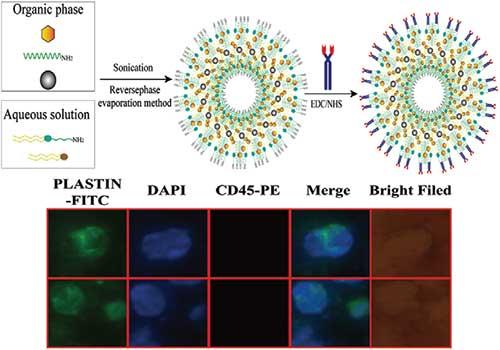 Journal of biomedical nanotechnology tinghui jiang qiuying li ping xiao yan liu kai wang xiaofei liang and xianjun sun j biomed nanotechnol 14 10901098 2018 fandeluxe Image collections