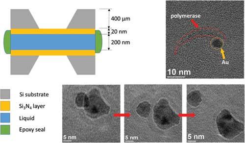 Journal of Biomedical Nanotechnology