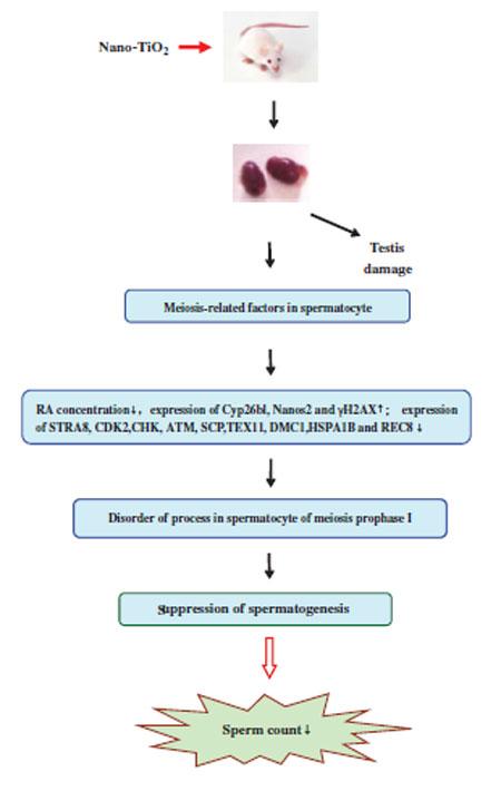 balsam articular nano artrita simptomele și tratamentul artrozei