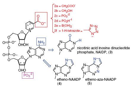 mercaptopurine structure activity relationship example