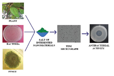 biosynthesis of metal and oxide nanoparticles 2013-7-30 摘要 rapid development of biosynthesis of metal nanoparticles using plants has attracted extensive interests to further investigate this novel and eco-friendly.
